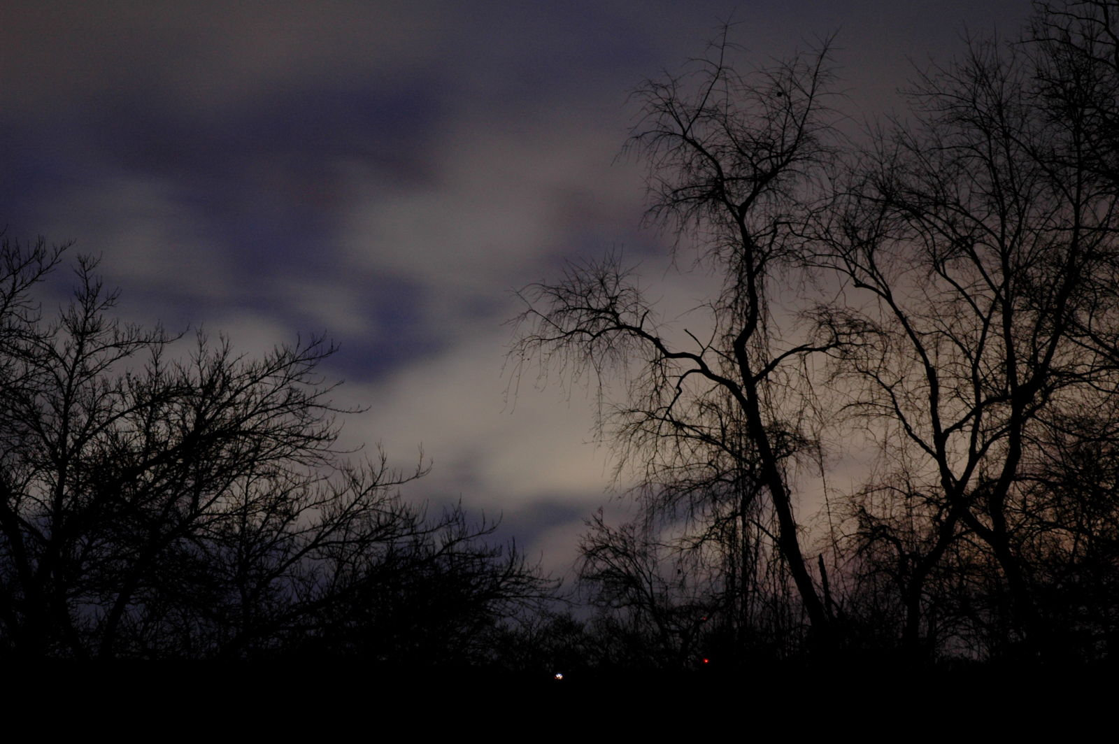 night sky with trees | asheville, nc